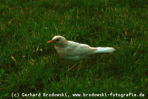 nest mit eiern gefunden kein vogel