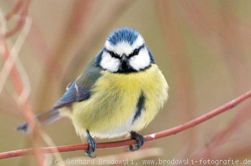 Vogelbilder Kostenlos