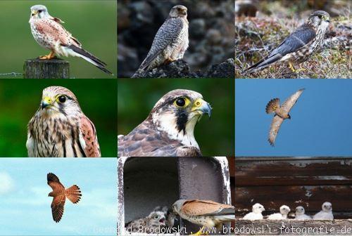 Falken Namen