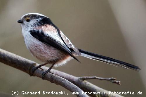 Gartenvögel Gartenvögel Bestimmen Gartenvögel Ganzjährig Füttern