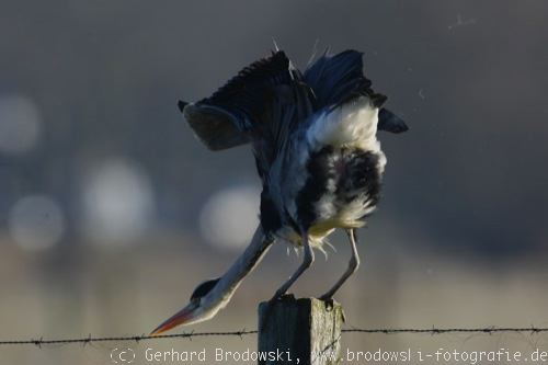 für vögel sachen kleidung