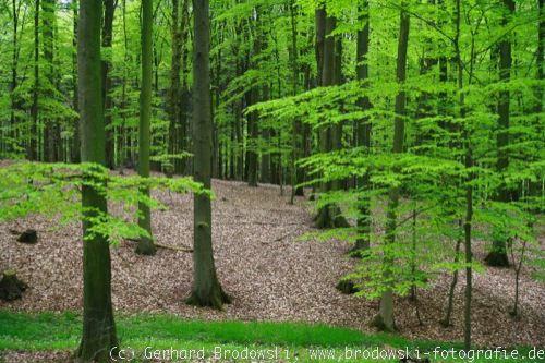 Lebensraum der Vögel - Wälder, Städte, Wiesen, Feuchtbiotops, Biologie