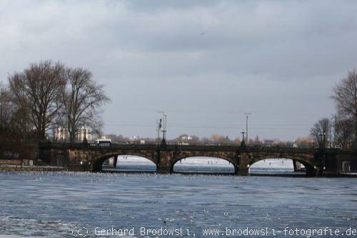 Möwen Im Winter Beobachtungen Bilder Und Steckbrief