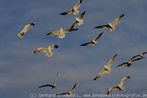 die vögel sw