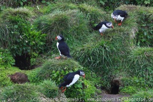 orkney islands steckbrief