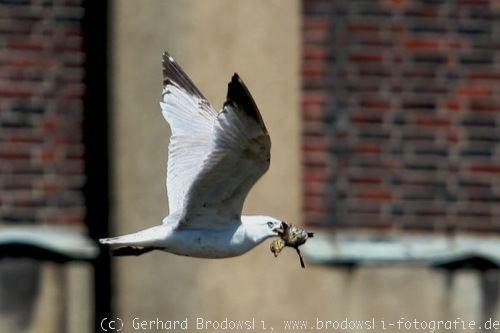 Vogelbilder zum thema vögel in hamburg