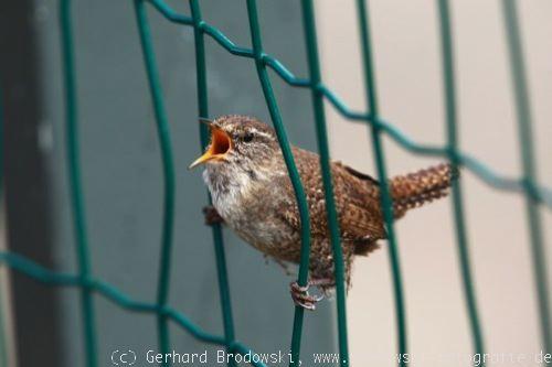 Hobby vogelbeobachtung für mädchen jungen und jugendliche