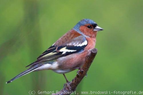 Gemeinsame Alle Vogelarten bestimmen - Heimische Vogelarten erkennen - Bilder @EY_58