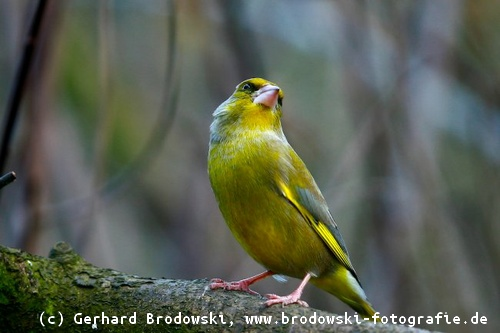 Gemeinsame Alle Vogelarten bestimmen - Heimische Vogelarten erkennen - Bilder @SQ_48