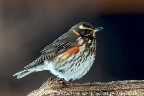 Berühmt Alle Vogelarten bestimmen - Heimische Vogelarten erkennen - Bilder @LB_04