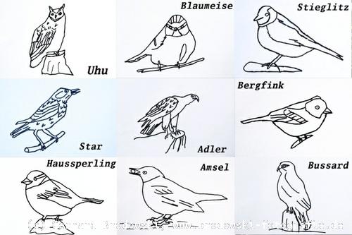 vogelbilder zum lernen vogelbilder zum ausmalen nachmalen. Black Bedroom Furniture Sets. Home Design Ideas