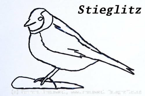 vogel malen kindergarten  tier malen