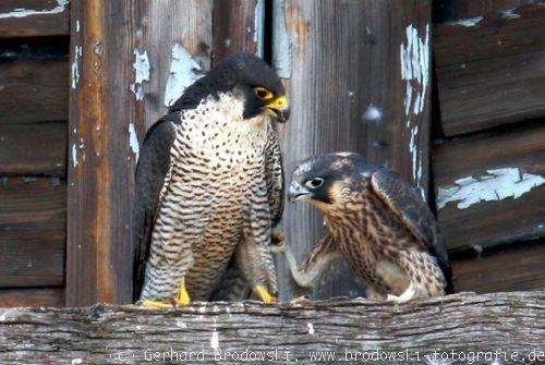 müssen wildvögel täglich gefüttert werden