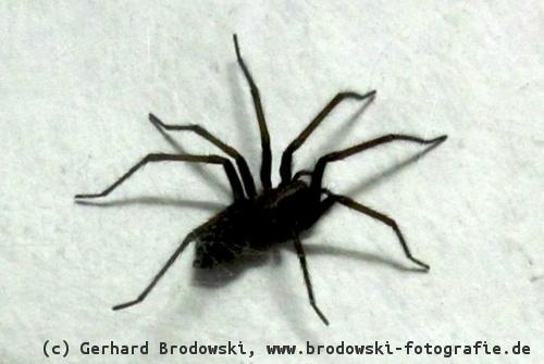 was fressen v gel jungv gel fressen insekten schnecken. Black Bedroom Furniture Sets. Home Design Ideas