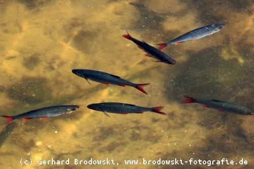 Was fressen v gel jungv gel fressen insekten schnecken for Was fressen teichfische