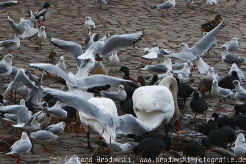 vögel haferflocken füttern